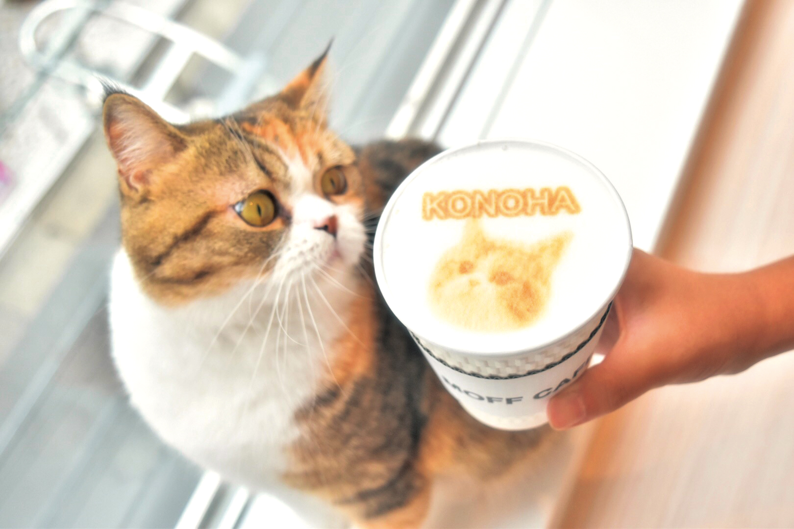Moff animal cafe名古屋PARCO店